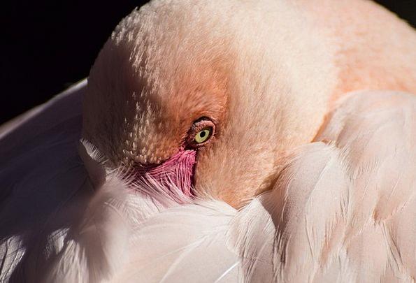 Flamingo Landscapes Menagerie Nature Nature Countr