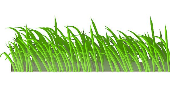 Grass Landscapes Lime Nature Lawn Green Grassland