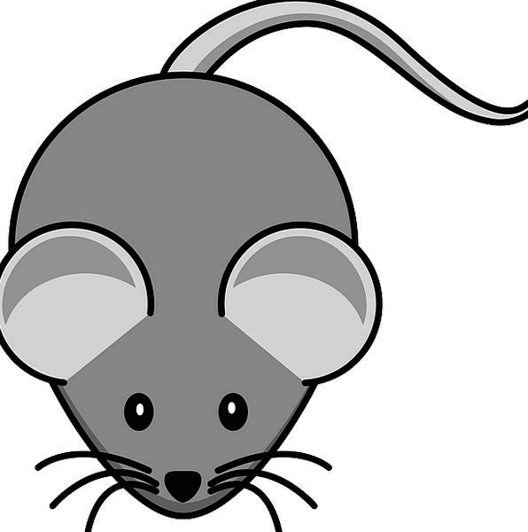 Mouse     Old  Animal  Physical  Grey  Tail  End     Schematic     Rodent     Diagram     Whiskers   PixCove