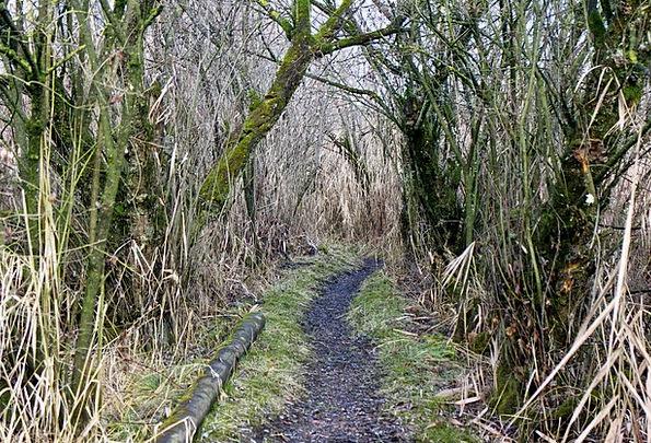 Trail Track Absent Path Away Grass Walk Gait Scrub
