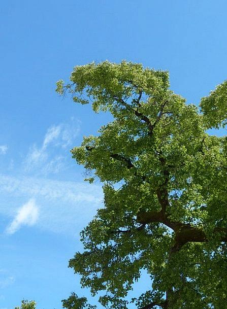 Tree Sapling Traffic Street Transportation Branch