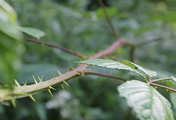 Scrub Undergrowth Landscapes Prickles Nature Bush