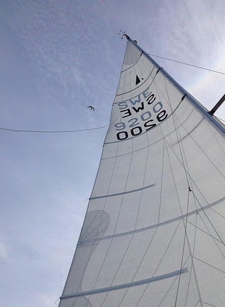 Sail Navigate Pole Sky Mast Bird Fowl Blue Azure