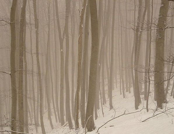Tree Sapling Fog Mist Tree Trunks Loneliness Haze