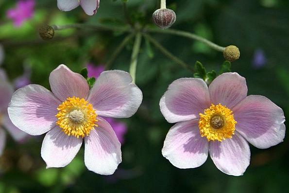 Flower Floret Flushed Floral Flowery Pink Fresh Bl