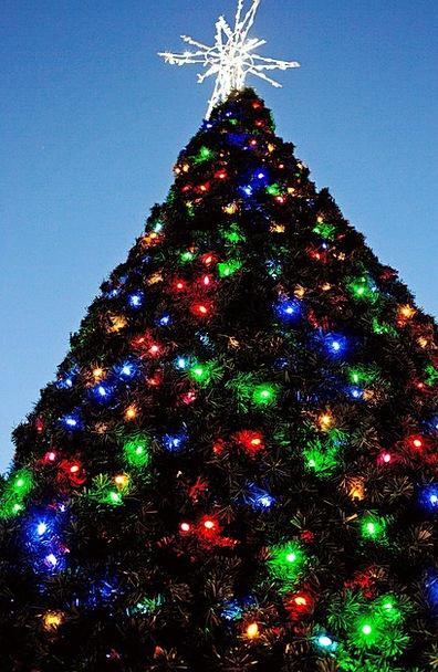 Christmas Tree Christmas Xmas Tree