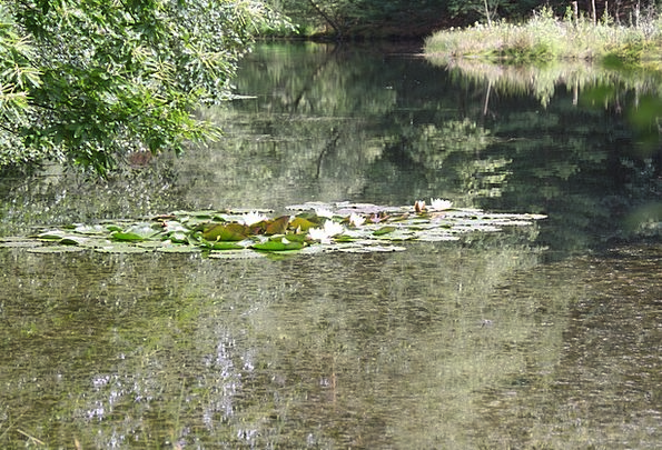 See Understand Ponds Biotope Pools Water Lilies Nu
