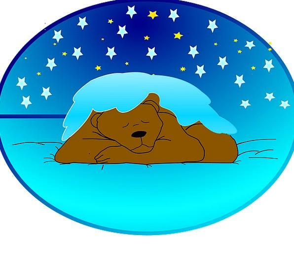 Winter Sleep Bear Tolerate Hibernation Snow Snowfl