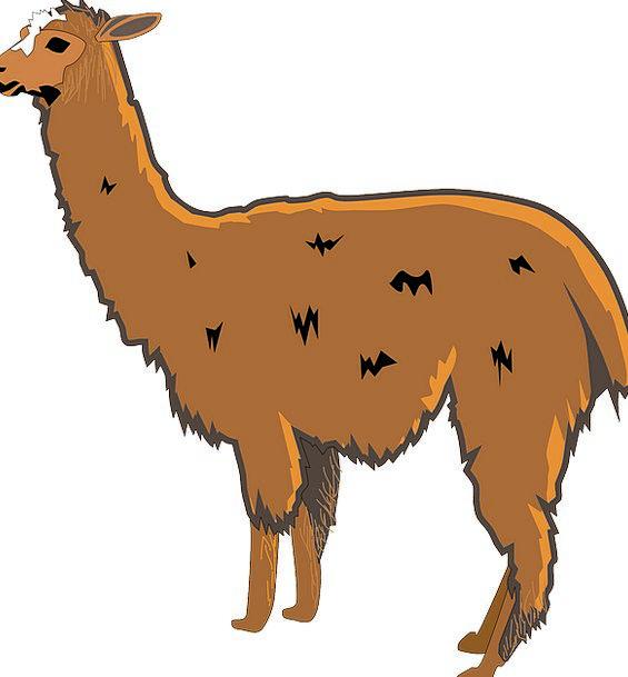 Llama Hairy Animal Physical Shaggy Mammal Creature