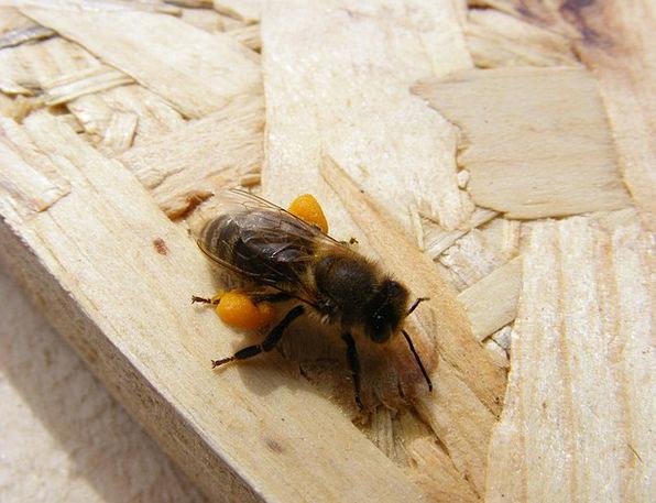 Bee Drink Nutritional Food Loaded Laden Dietary Po