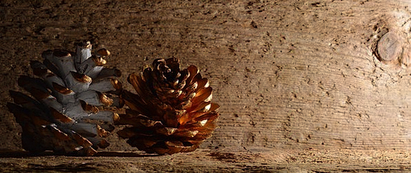 Pine Cones Textures Timber Backgrounds Background
