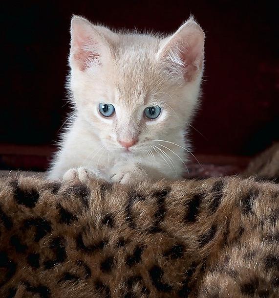 Kitty Fund Kitten Cat Adorable Pet Domesticated Yo