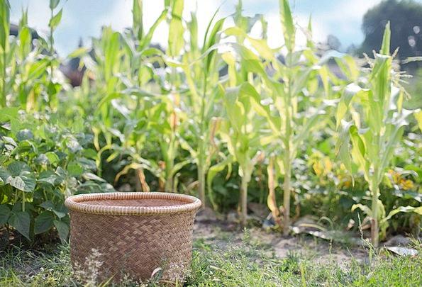 Basket Bag Landscapes Nature Crop Harvest Agricult