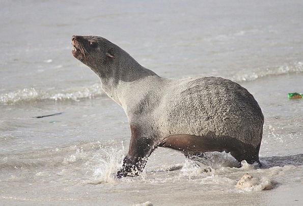 Seal Closure Vacation Marine Travel Beach Seashore