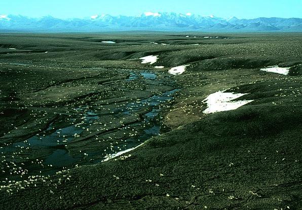 Alaska Landscapes Scenery Nature Caribou Landscape