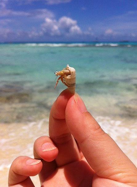 Hermit Crab Coral The Sea Reef Ridge