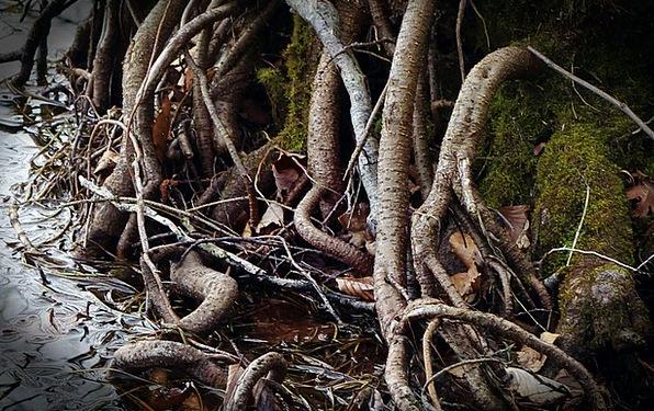 Root Origin Dense Devoured Consumed Overgrown Wate