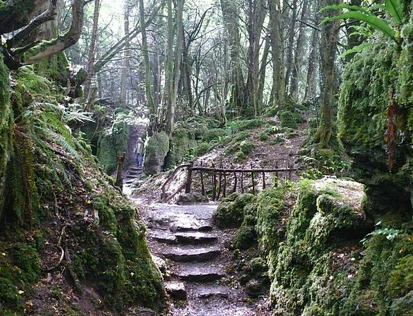 Stairs Staircases Landscapes Woodland Nature Mysti
