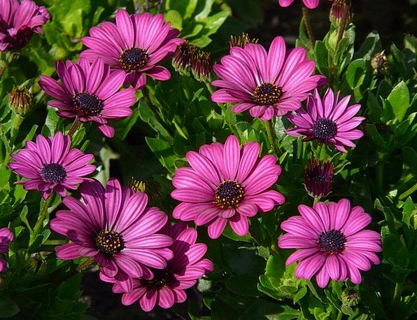 Gerbera Landscapes Plants Nature Plant Vegetable F