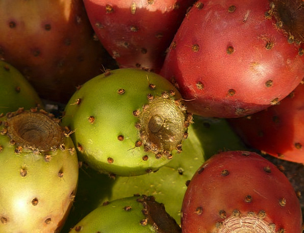 Prickly Pear Landscapes Nature Figs Cactus Fruits