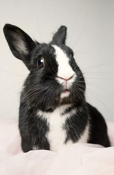 Bunny Cute Attractive Rabbit Sweet Animal Physical