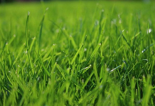 Grass Lawn Lime Garden Plot Green Macro Instructio