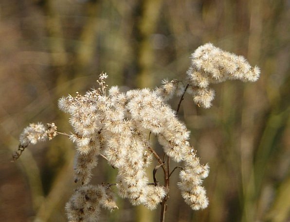 Grasses Flower Wasted Tender Loving Withered