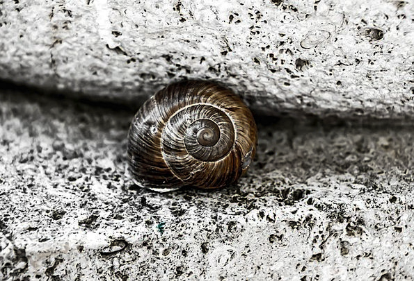 Snail Bomb Stone Pebble Shell Spiral Twisting Brow