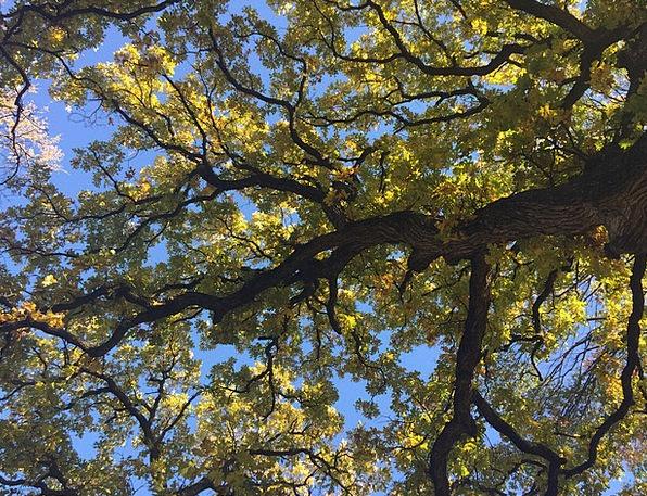 Tree Sapling Landscapes Reduction Nature Autumn Fa