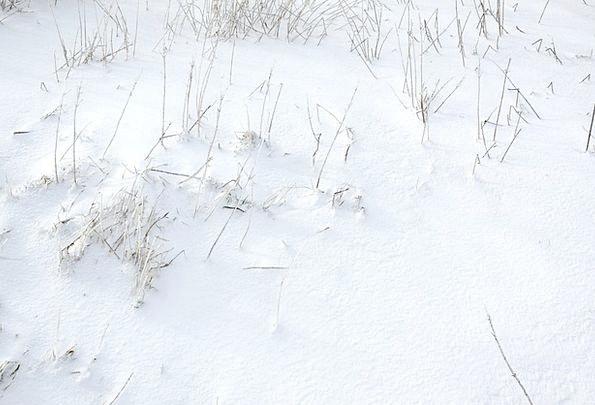 Snow Snowflake Emotionless Winter Season Cold Snow