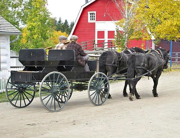 Horse Carriage Cattle Park Common Horses Alberta C