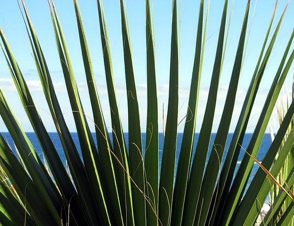 Palm Tribute Landscapes Nature Prickly Touchy Jame