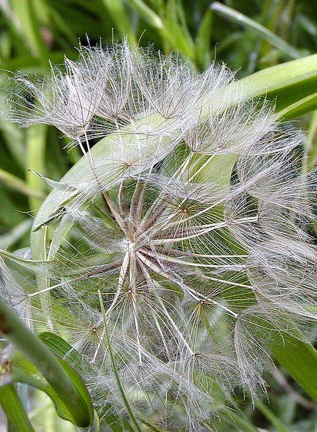 Dandelion Down Faded Stonewashed Fluff Spring Coil