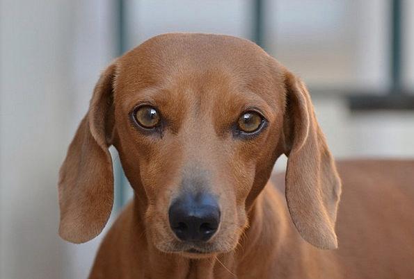 Dog Appearance Canine Doglike Look Pet Domesticate