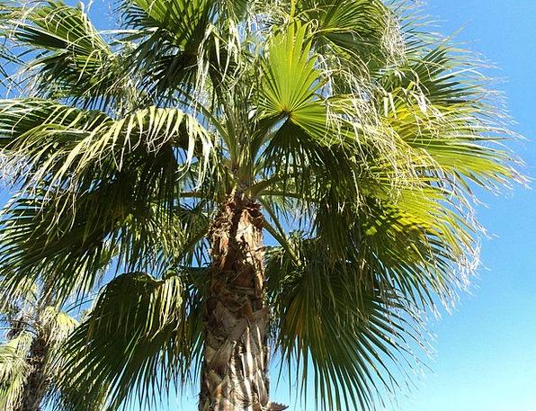 Palm Tribute Landscapes Nature Antalya Turkey Holi