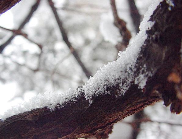 Snow Snowflake Division Snowflakes Snows Branch Co