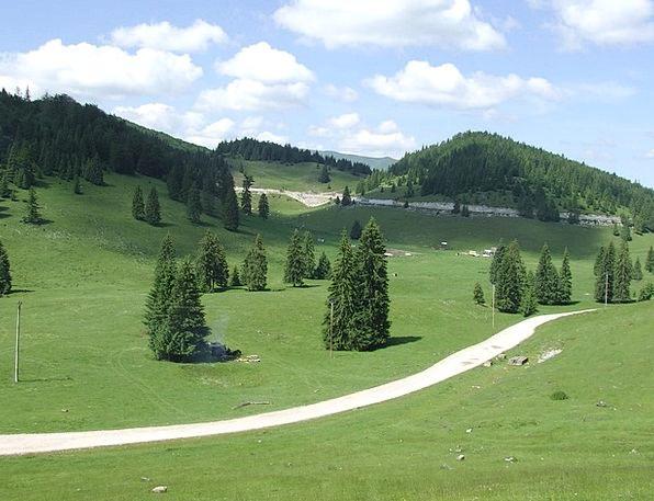 Transylvania Landscapes Nature Forest Woodland Pad