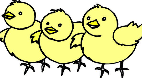 Chicks Darling Yellow Creamy Baby Free Vector Grap