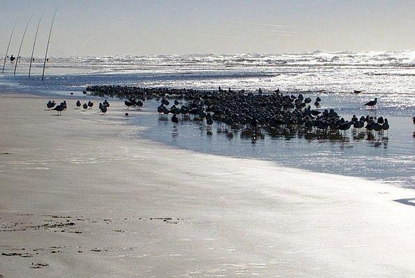 Ocean Marine Vacation Upsurge Travel Bird Fowl Wav