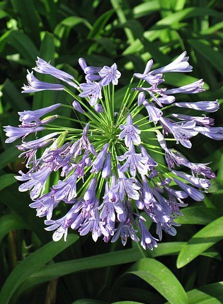 Flower Floret Landscapes Azure Nature Nature Count