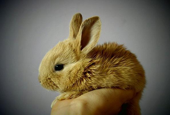 Rabbit Bunny Tribute Hand Pointer Palm Snatch Grab