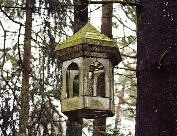 Aviary Birdcage Landscapes Sapling Nature Nature C