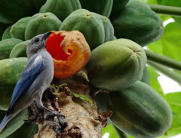 Birdie Landscapes Countryside Nature Fruit Ovary N