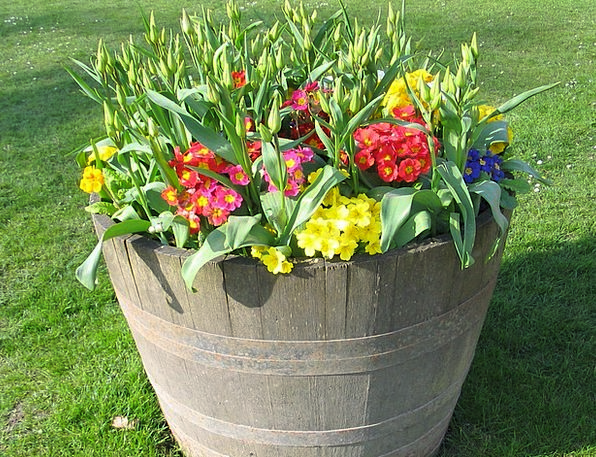 Pot Vessel Plants Bloom Flowers Coloured Various F
