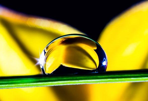 Drop Of Water Drop Blade Of Grass Drip Flower Flor