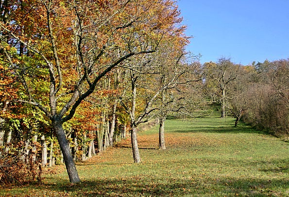 What trees are planted in the autumn Which fruit trees are planted in the fall