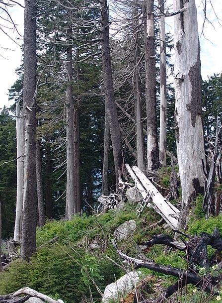 Forest Dieback Landscapes Nature Forest Woodland F