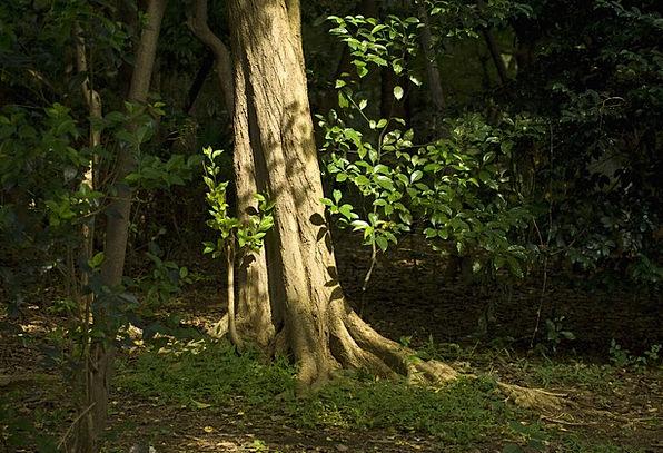 Tree Sapling Landscapes Woodland Nature Sunset Sun
