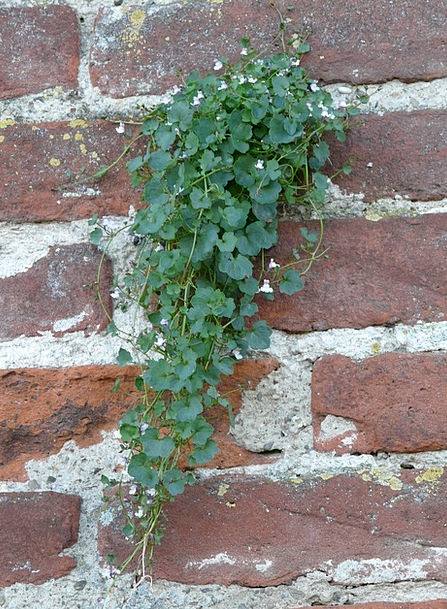 Wall Partition Landscapes Entangling Nature Plant