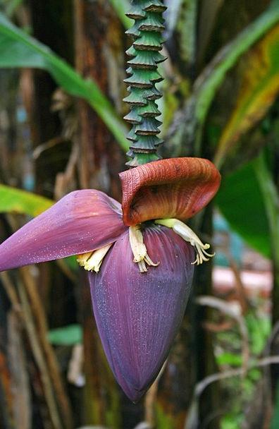 Banana Drink Sapling Food Flower Floret Tree Bloss